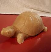 turtle-candle.jpg